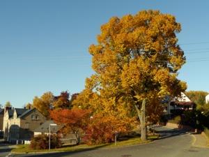 Herbst08 B in Heimatdorf